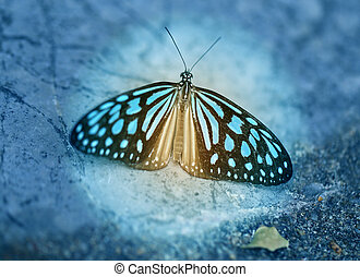 Photo of a beautiful tropical butterfly - Macro photo of a...
