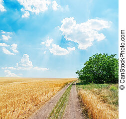 rural road in golden agricultural field under clouds in blue sky.