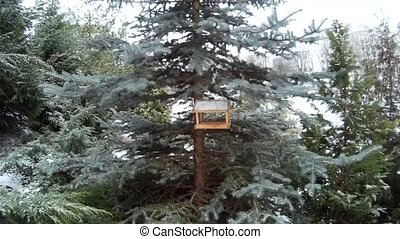 Bird feeder in snowing winter park Ukraine