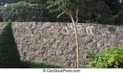 Stone wall with climbing plants - RUSSIA, GURZUF, OCTOBER,...