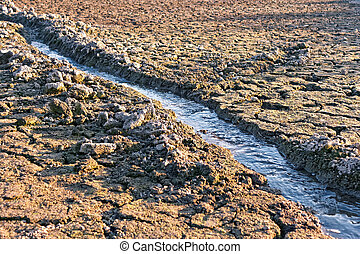 Water stream among dried cracked earth - Small water stream...