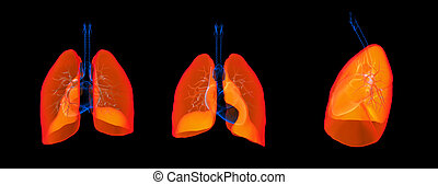 3D render illustration of the lung