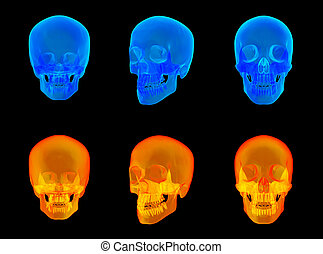 3d render of the human x ray skull