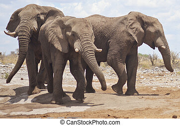 elephants in Africa