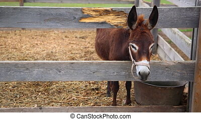 a donkey behind the wooden fence in fauna