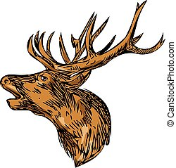 Red Deer Stag Head Roaring Drawing - Drawing sketch style...