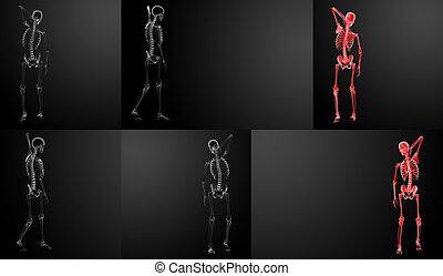 3d rendering Skeleton X-rays