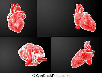 3D rendering of the  red Heart