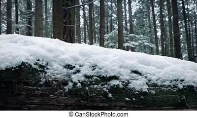 Passing Snow Covered Log In Forest - Passing snow-covered...