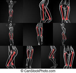 3D rendering illustration of the femur bone