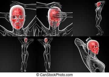 3D rendering illustration of the skull bone
