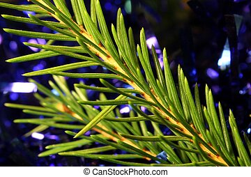 Christmas branch and decorations - Christmas branch and blue...