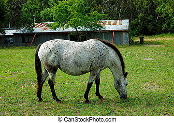 Horse Portrait, Gray Mare - Portrait of a gray horse