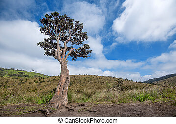 Lonely tree in Horton Plains - Scenic view with lonely tree...