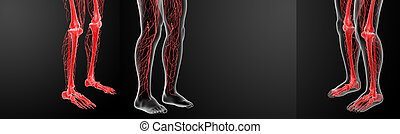 3D rendering lymphatic system visible leg