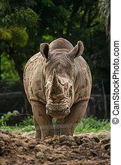 rhino and nature