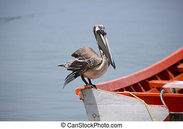 Pelican standing on a fisher boat, Margarita Island -...