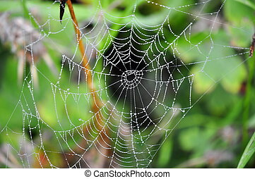 cobweb - Dewdrops in a spiders web