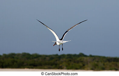 Sea bird - A single sea bird flying