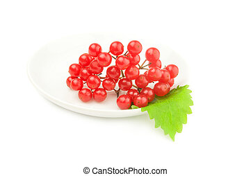 Viburnum with red berries isolated on a white background with clipping path