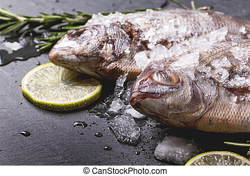 Tow raw under with ice - Close up of raw fish bream with...