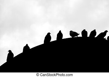 Silhouette of pigeons on the top of roof, Bogota - Group of...