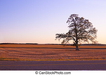 Single Tree Alone on Country Landscape - Single tree...
