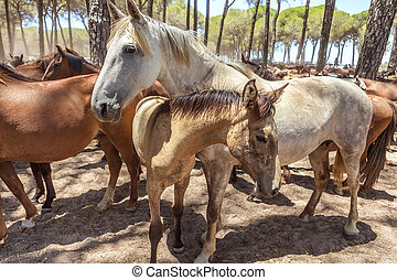 Herd horses at rest in the corral after the baptism. El...