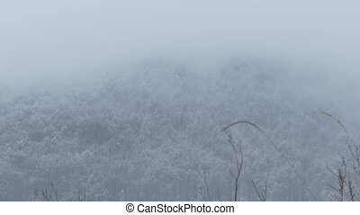 Frozen Forest and Fog - Frozen forest and fogs over winter...
