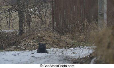 Dog Sits on Winter Road - Black curly dog sitting on the...