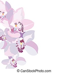 Orchid flowers isolated