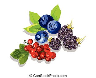 Blackberry, blueberry and cranberry fruit set Vector in...