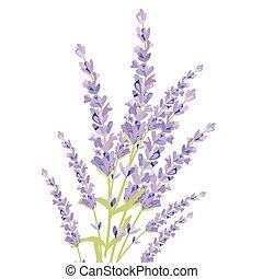Lavender color flowers Card Border. Gentle blossom floral...