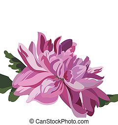 Chrysanthemum Flower isolated on white. Vector watercolor...