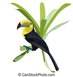 Toucan bird Vector - Toucan bird sitting on a flower Vector...