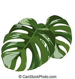 Palm tree leaves isolated