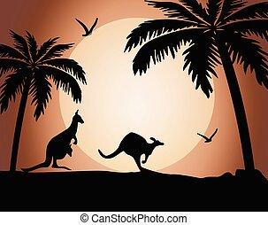 Kangaroo silhouette on sunset