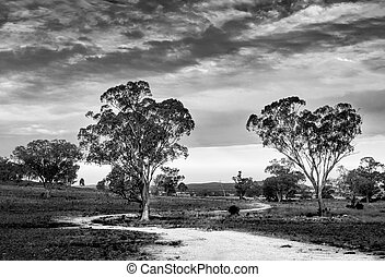 Dirt road winds around trees in a field in the mid west of New South Wales, remote Australia, in monochrome black and white
