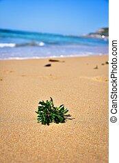 Seaweed on Nobbys Beach, Newcastle, Australia