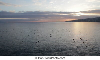 Clam Farm in Naples - Mediterranean mussel farm in Naples,...