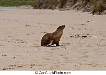 sea lion in new zealand