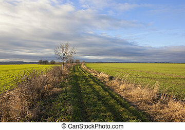 yorkshire wolds bridleway - a grassy bridleway beside green...