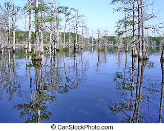 Mississippi the Black Bayou - The Black Bayou near...