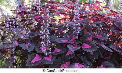 Violet flower bush in the public park, stock video
