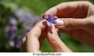 Woman found lucky flower in Lilac bush. Natural spring...