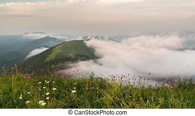 Evening above clouds moving in valley time lapse. Sunset over meadow flowers