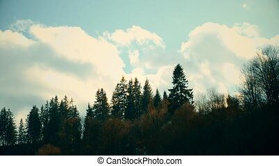 White cumulus clouds move fast over fir trees in mountains....