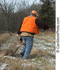 Deer Hunter - A deer hunter with a Whitetail Buck