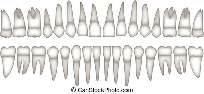 3D human teeth isometric vector icons set. Dental implant...