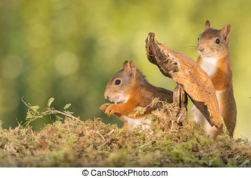 sneaking - red squirrels standing with a mushroom